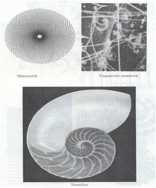 Spirala fibonacciego forex