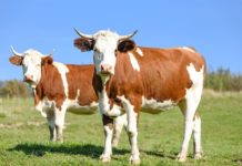 Kredyt rolniczy na zakup zwierząt